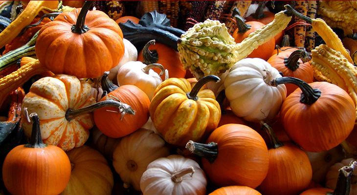 PumpkinsAndGourds